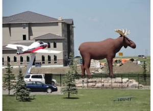 World's Largest Moose