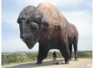 The World's Largest Buffalo