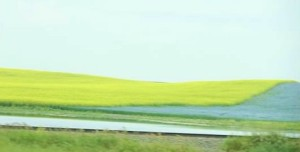 Canola and flax
