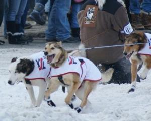Dogs having fun