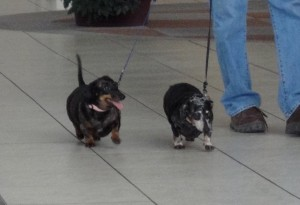Daisy & Coco in the airport
