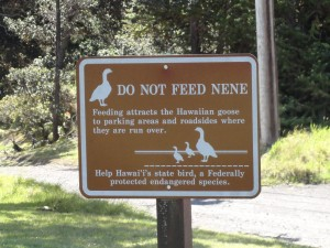 Don't Feed the Nene
