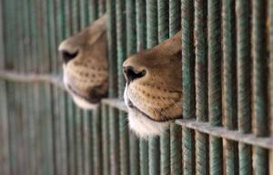 Kool 101.5 The Cats from the Zoo are in Jail